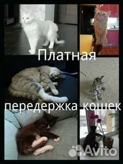 Услуги - Передержка кошек и котов. Зеленоград в Москве предложение и поиск услуг на Avito - Объявления на сайте Avito