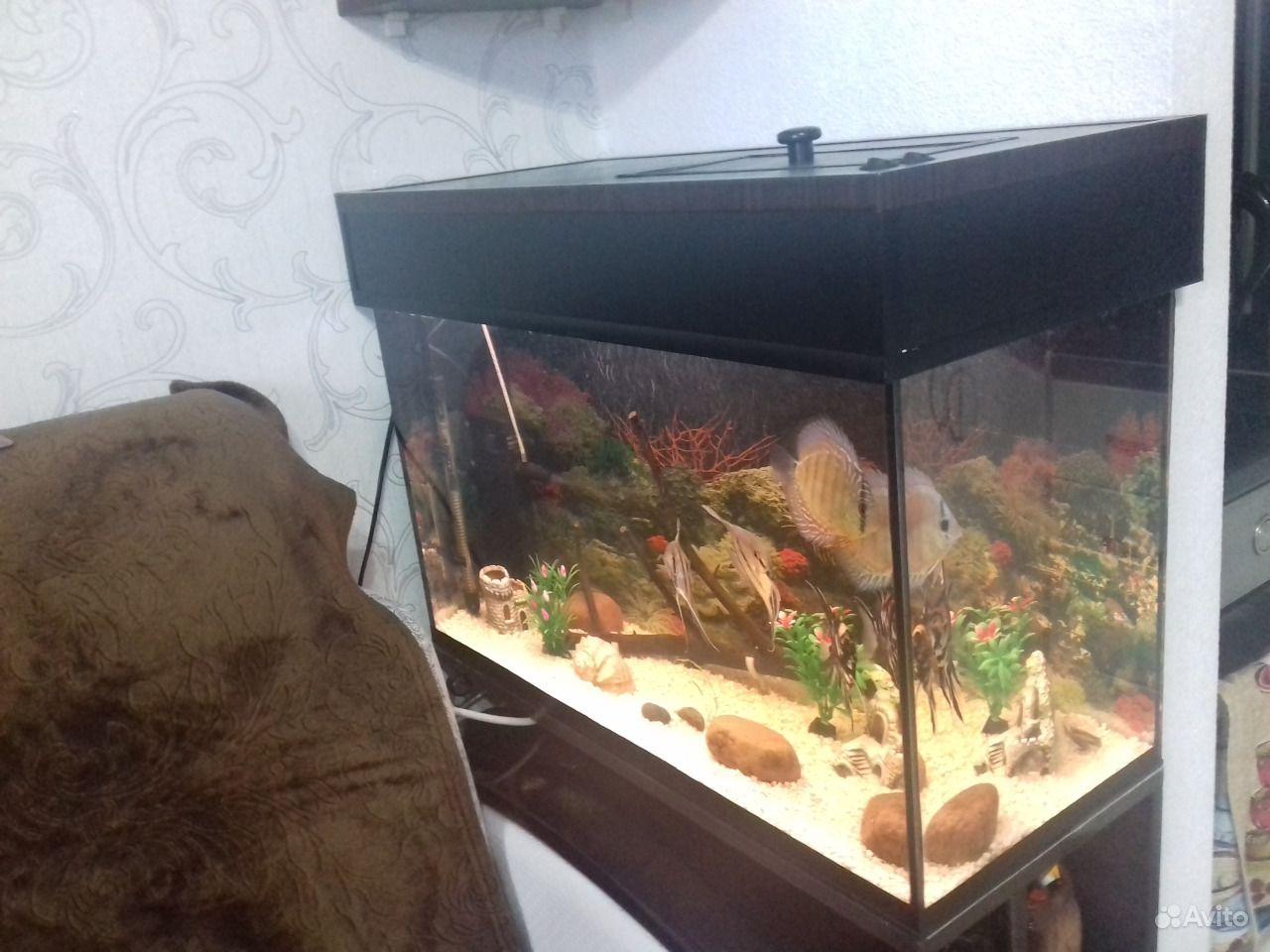 Аквариум 84 литра купить на Зозу.ру - фотография № 3