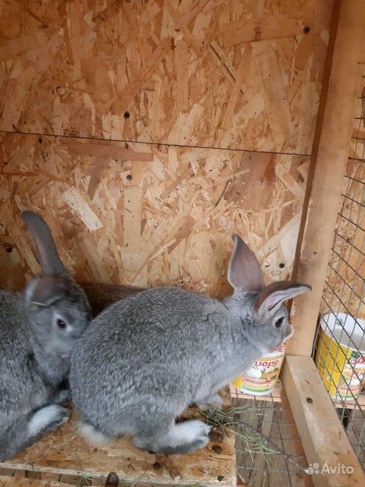 Крольчата в Самаре - фотография № 2