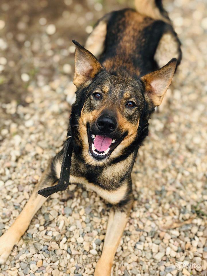 Молодая собака ищет своего человека в Ярославле - фотография № 1