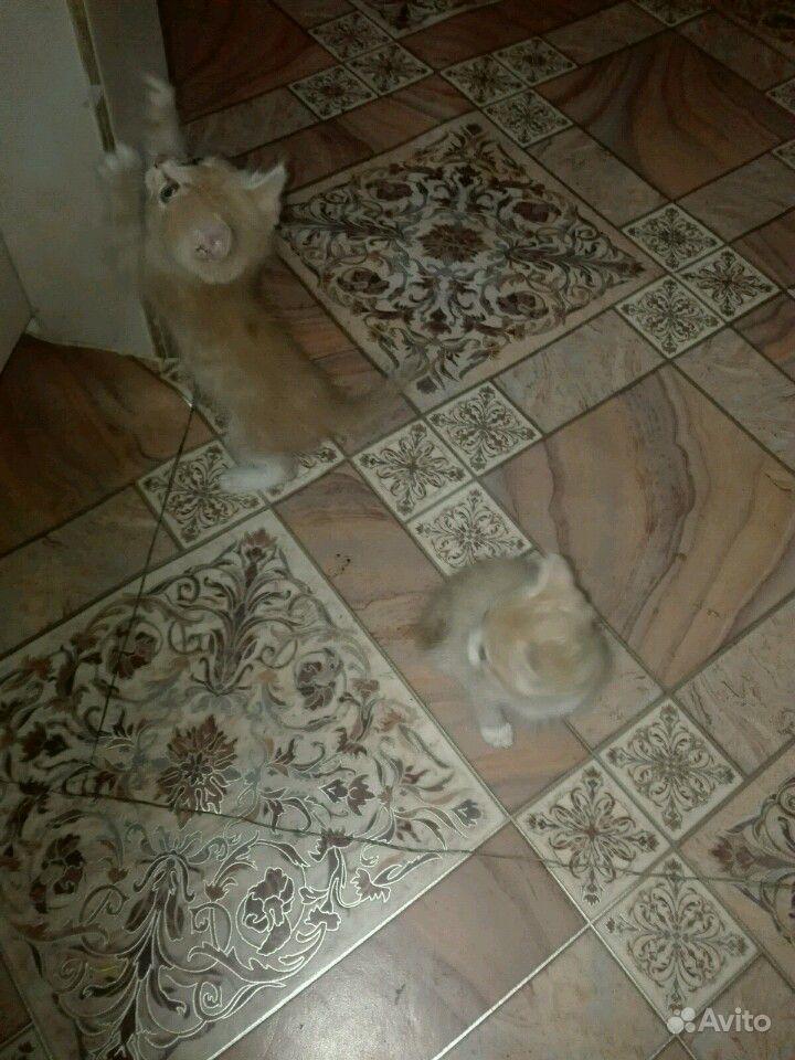 Котики 2 мес отдам в хорошие руки кушают все потом