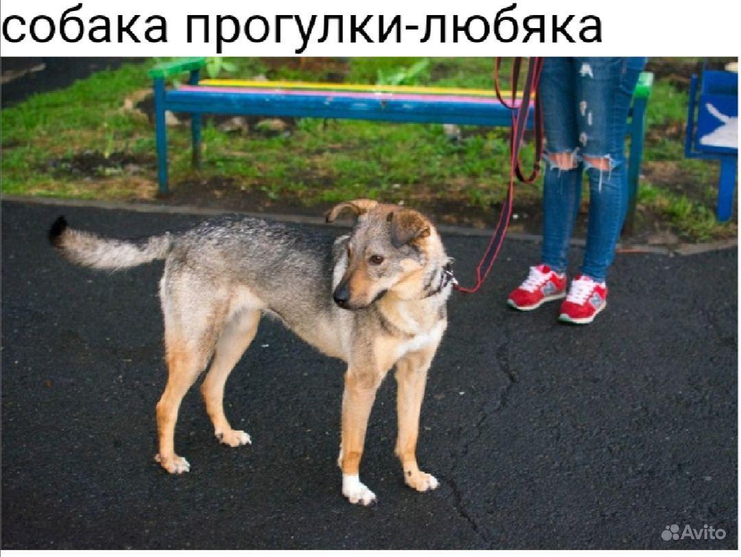 Собака в добрые руки