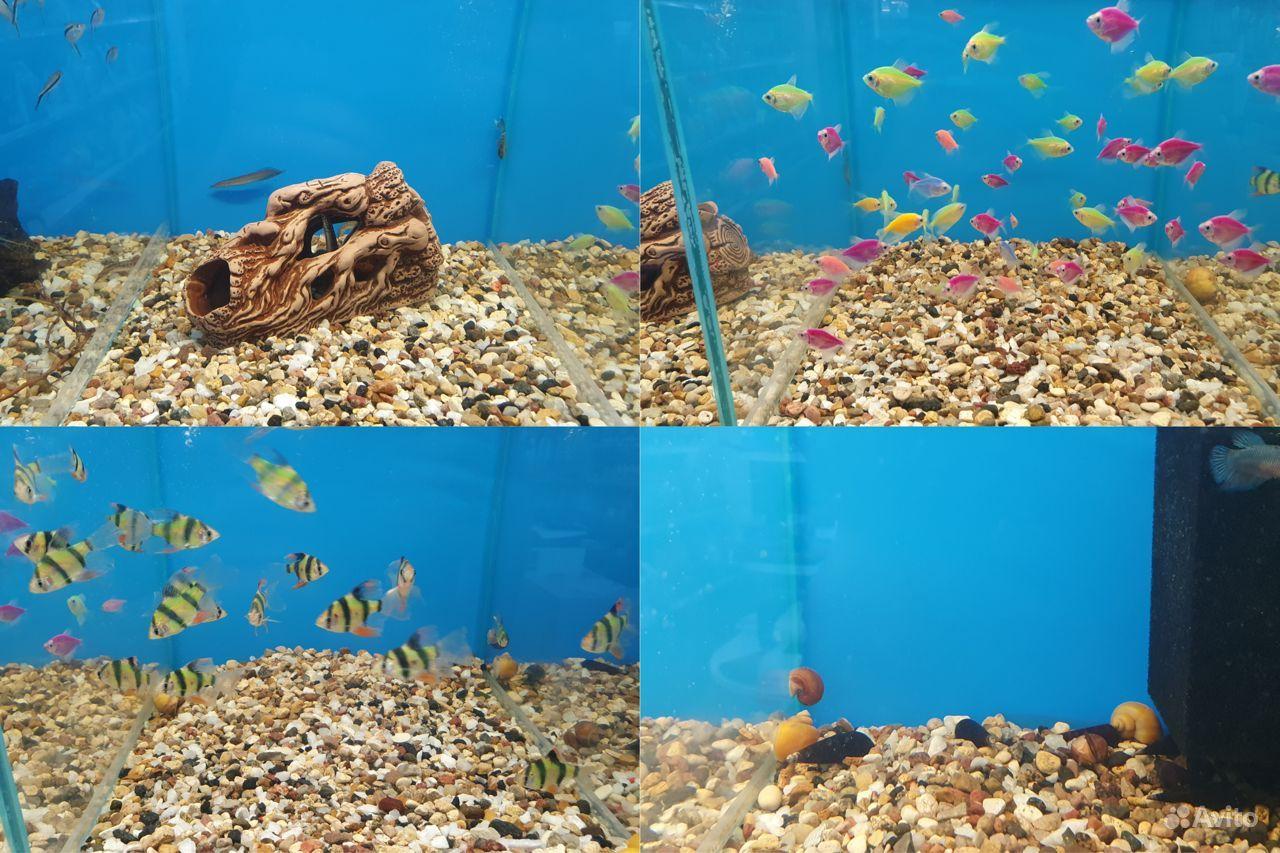 Аквариумные рыбки купить на Зозу.ру - фотография № 3