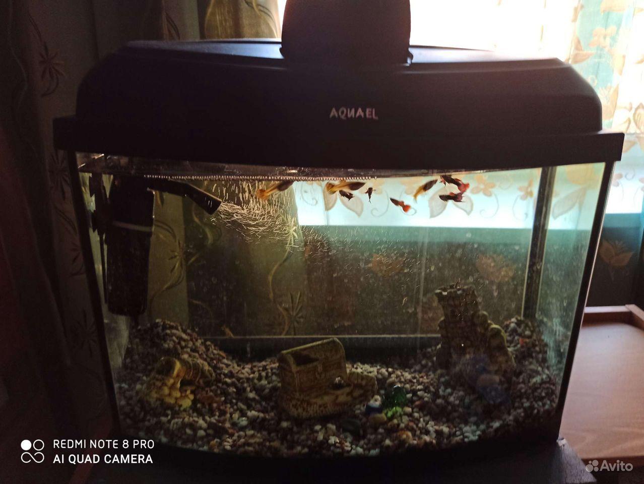 Аквариум, рыбки гуппи купить на Зозу.ру - фотография № 6