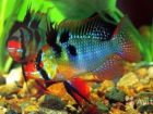 Разные рыбки и растения собственного разведения