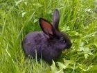 Продам кроликов метисов