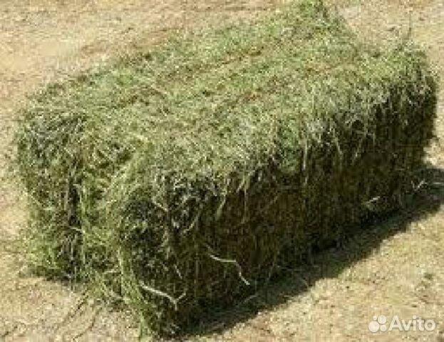 купить сено в тюках этом году налоговое