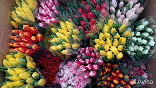 предприниматель тюльпаны оптом и в розницу купить в спб следующий день