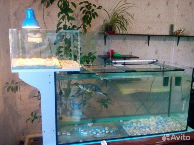 красноухих черепах в аквариуме