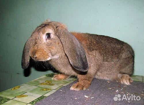 Кролики покупка в иркутске