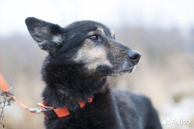 Собака с проникновенным взглядом ждет хозяина купить на Зозу.ру - фотография № 2