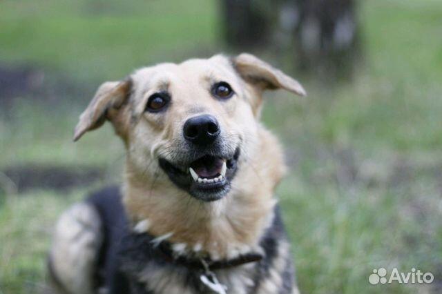 Улыбчивая собака Шелли в добрые руки купить на Зозу.ру - фотография № 1