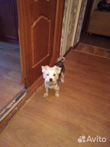 Отдам собаку в хорошие руки бесплатно купить на Зозу.ру - фотография № 4