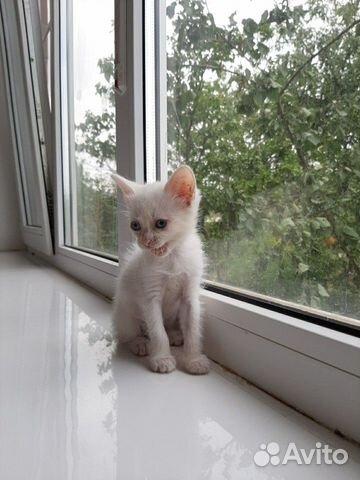 Отдам котенка в добрые руки 89882282880 купить 4
