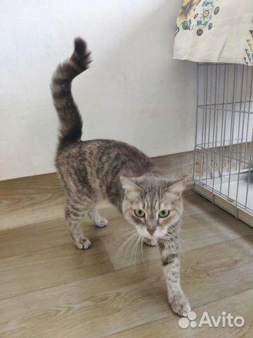 Кошка Плюша, 1 год  купить 2