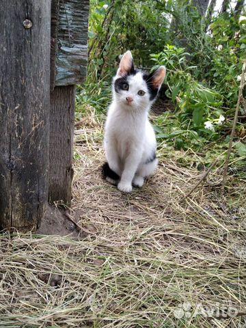 Кошка  89520229803 купить 2