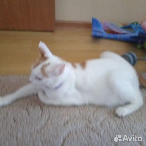 Кошка  89787802488 купить 5