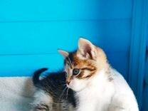 2 котёнка девочка и мальчик