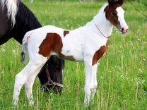 Пони и кони на продажу. Продажа,обмен