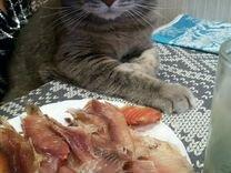 Отдам кота в добрые руки бесплатно