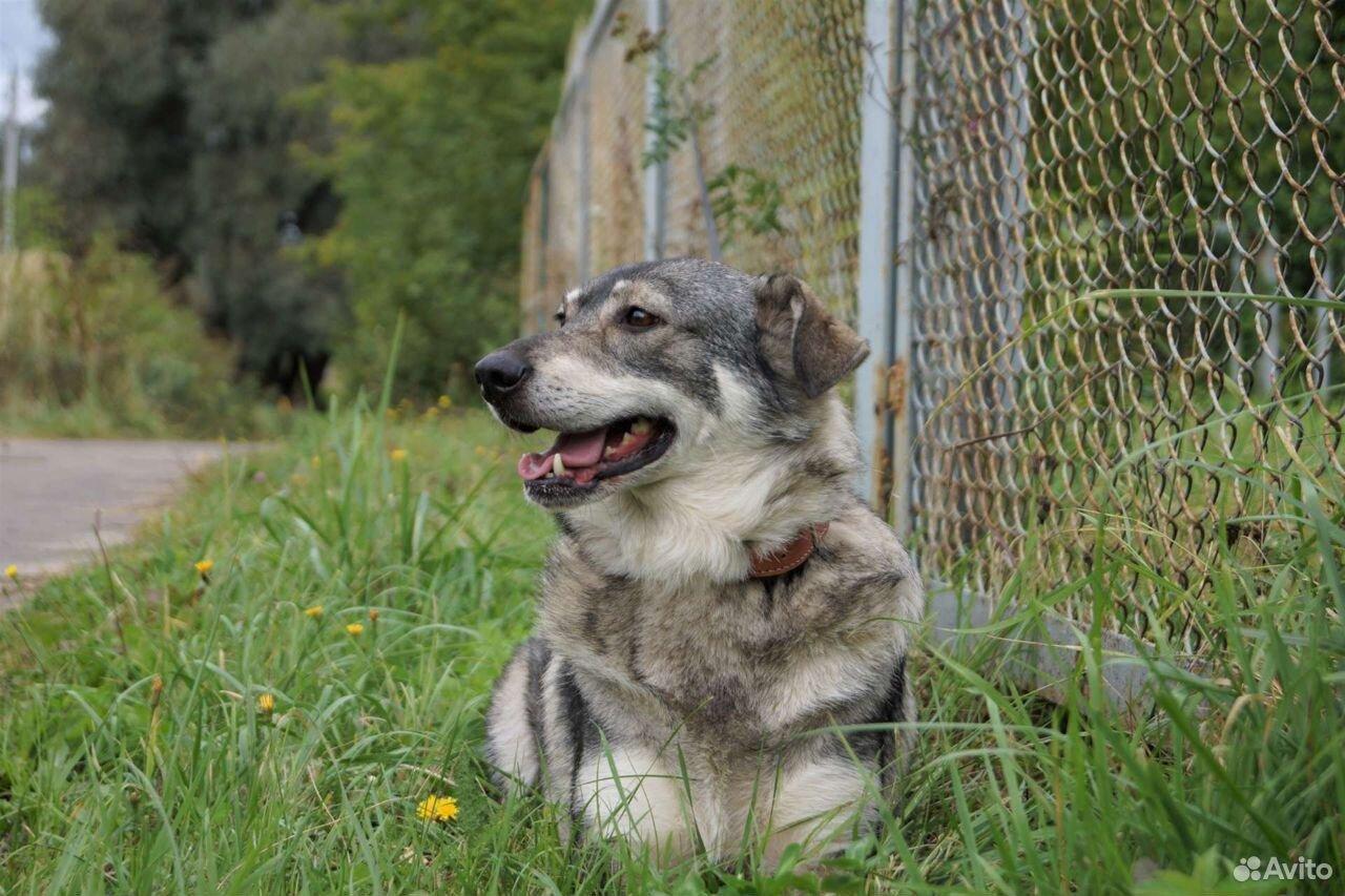 Мооодая собачка Венди, привита, стерилизована