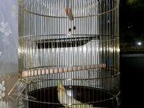 Попугай корелла с новой клеткой