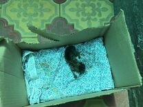 Новорожденный котенок в добрые руки