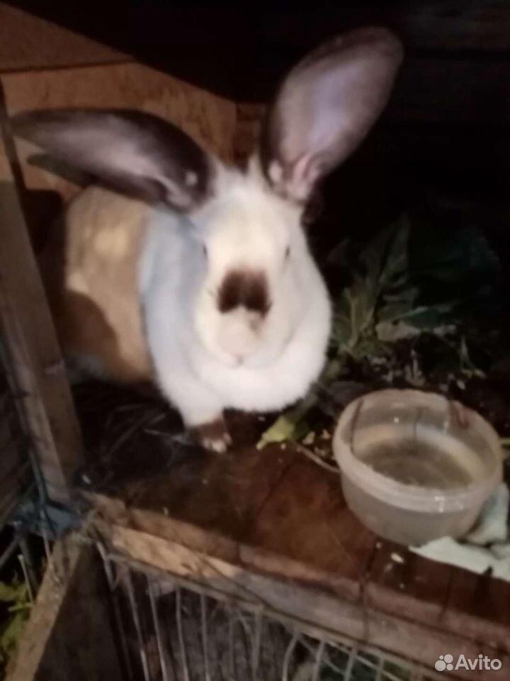 Кролики помеси крупные, здоровые  89277484764 купить 1