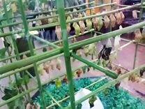 Высоко рентабельный бизнес ферма Живых Бабочек