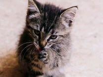Котенок Мира в добрые руки