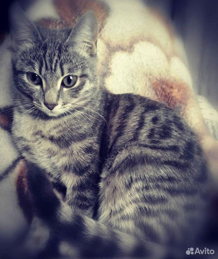 Geb die Katze in gute Hände  89236062474 kaufen 1