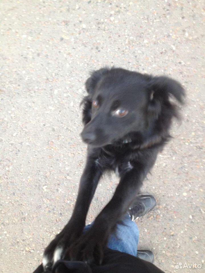 Собака ищет дом  89619299394 купить 1