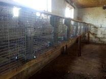 Нзб клетки ферма