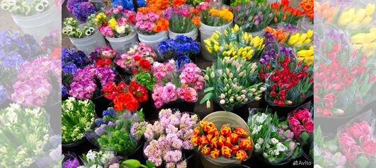 Цветы срезка что это